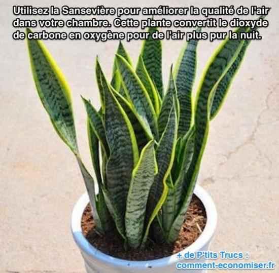 Utilisez la Sansevière pour améliorer la qualité de l'air dans votre chambre. Cette plante convertit le dioxyde de carbone en oxygène pour de l'air plus pour la nuit.