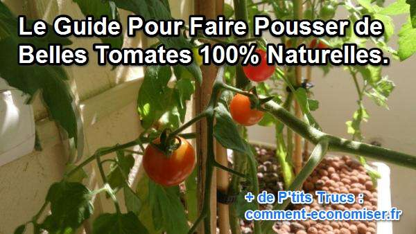 comment faire pousser de belles tomates 100 naturelles. Black Bedroom Furniture Sets. Home Design Ideas