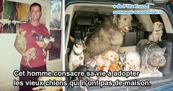 adoption de vieux chiens dans un refuge par cet homme offrir une vie meilleure