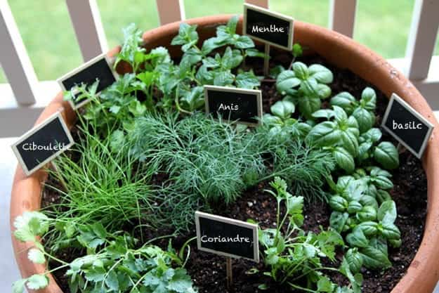 Herbes Aromatiques 18 Facons Astucieuses De Les Faire Pousser En