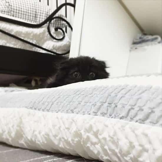 chat noir caché dans lit