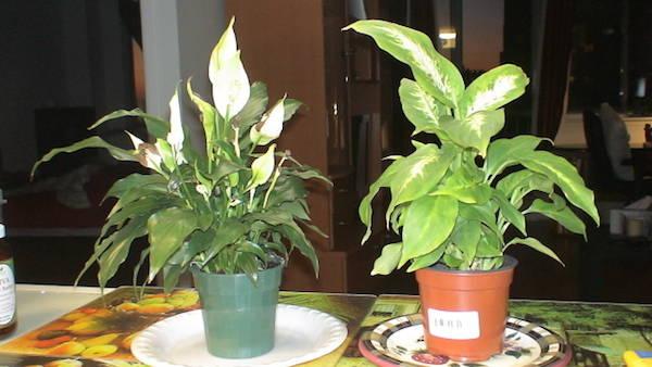 9 plantes d 39 int rieur qui nettoient l 39 air et qui sont for Plante grimpante interieur ombre