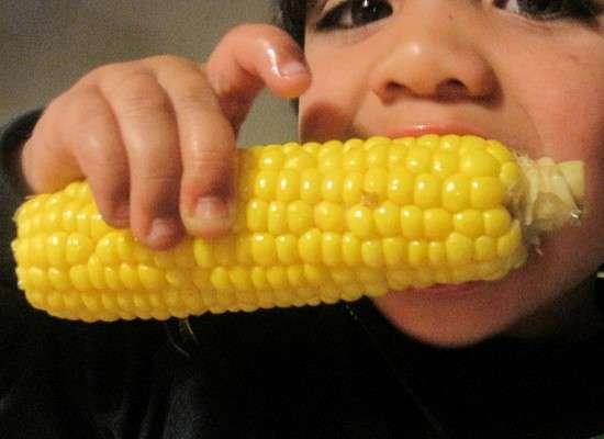 danger du maïs pour la santé