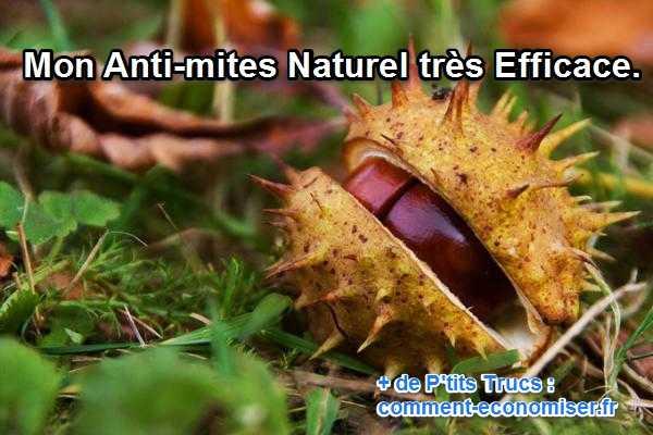 Mon anti mite naturel tr s efficace - Que faire contre les mites ...