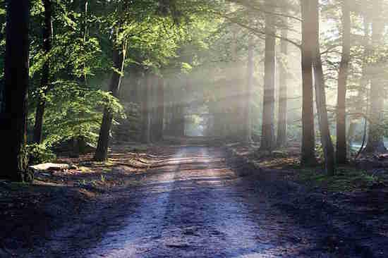 Se promener dans la forêt