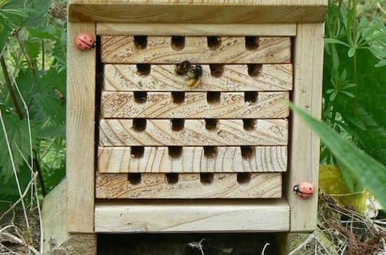 Fabriquer un nichoir pour abeilles