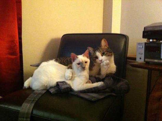 Les photos de chats les plus comiques