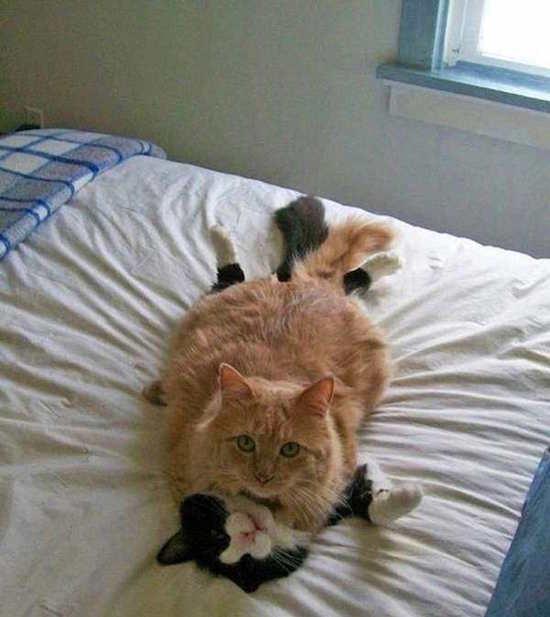 Les photos de chats les plus drôles