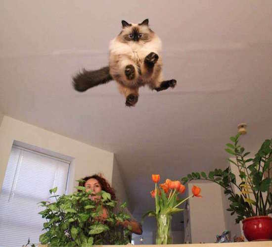 Les photos de chats les plus amusantes
