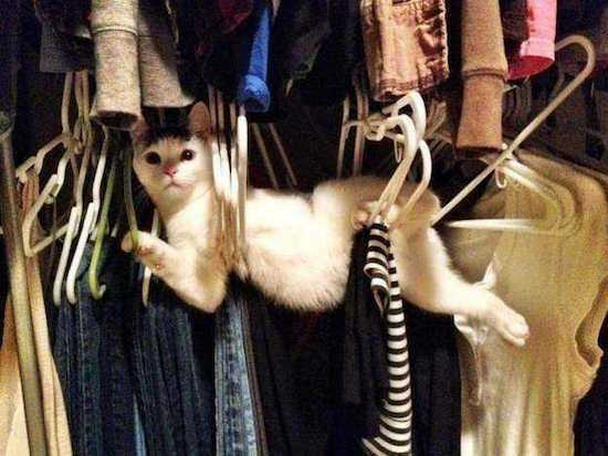 Les photos de chats les plus rigolotes