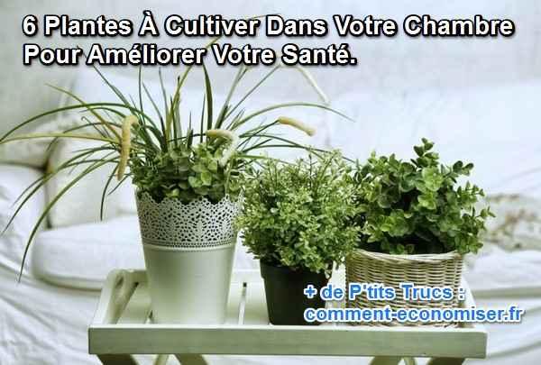 6 Plantes A Faire Pousser Dans Votre Chambre Pour Ameliorer