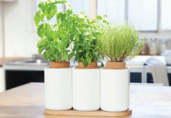 un potager dintrieur autonome pour faire pousser des aromates - Lampe Pour Faire Pousser
