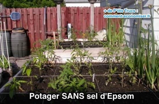 Exemple de potager sans utiliser du sel d'epsom