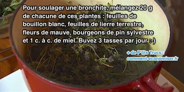 remèdes naturels aux plantes pour soigner une bronchite