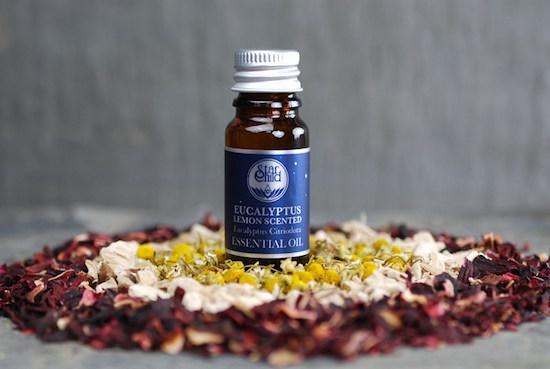 5 Remèdes Naturels Anti-Moustiques Vraiment Efficaces.