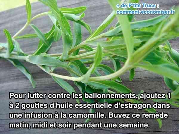 plantes contre ballonnements et flatulences
