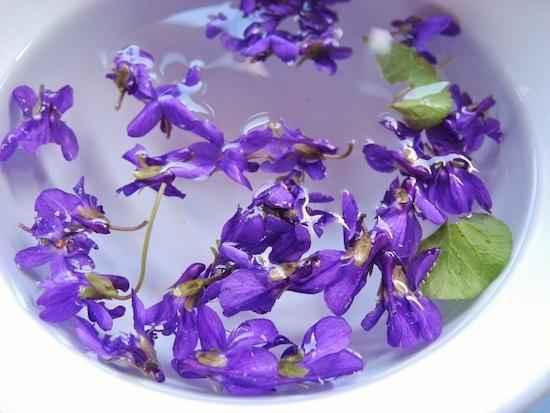 recette de tisane de violettes pour calmer la toux