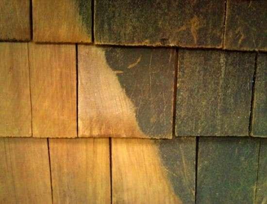 4 utilisations du sel d 39 oseille que personne ne conna t - Blanchir du bois ...