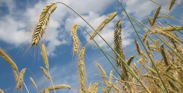Saviez vous qu'on peut conserver la farine au congélateur ?
