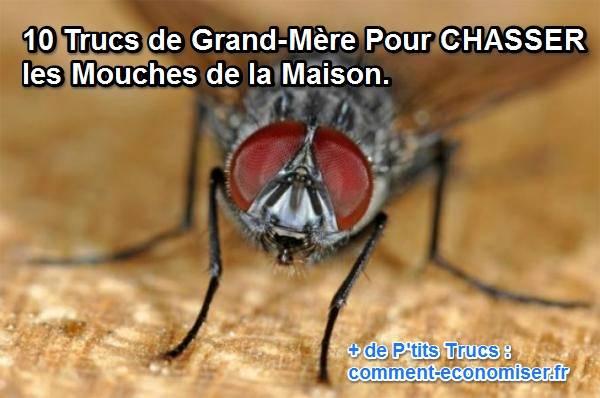 10 trucs naturels pour chasser les mouches