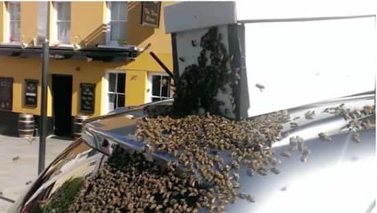 un essaim d 39 abeilles suit une voiture pendant 2 jours pour sauver leur reine coinc e dans le coffre. Black Bedroom Furniture Sets. Home Design Ideas