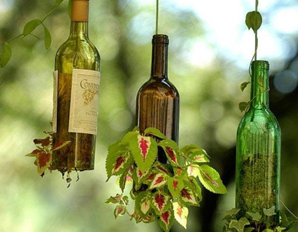 bouteilles suspensions plantes