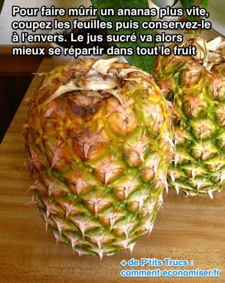 L 39 astuce pour faire m rir un ananas rapidement - Comment faire pousser un ananas ...