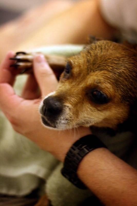 10 astuces simples pour conomiser de l 39 argent quand on a un chien - Couper les ongle d un chien ...