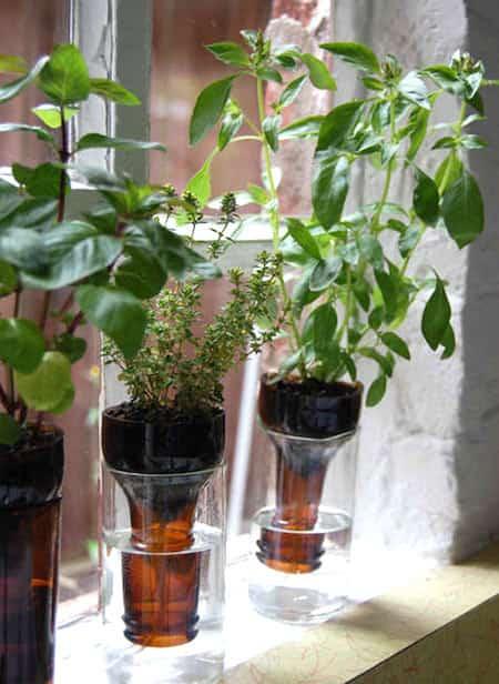 jardin aromatique d'intérieur dans bouteille en verre