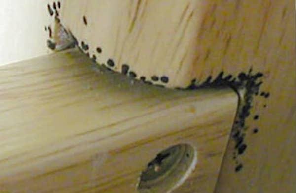 voici comment savoir s 39 il y a des punaises de lit dans votre chambre d 39 h tel. Black Bedroom Furniture Sets. Home Design Ideas