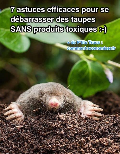 7 astuces efficaces pour se d barrasser des taupes sans produits toxiques - Comment chasser les taupes du jardin ...