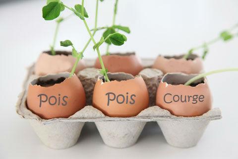 nommer vos semis pour les reconnaitre une fois poussés