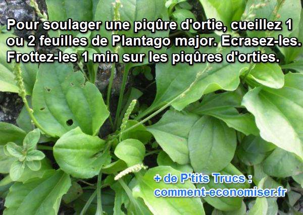 Le rem de de grand m re pour soulager les piq res d 39 orties - Remede piqure de moustique ...