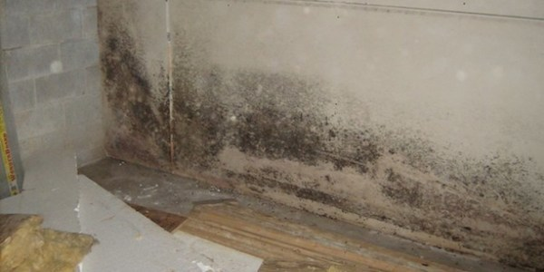 Comment se débarrasser des traces de moisissures ?