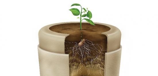 cette urne biod grable vous transforme en arbre apr s la vie. Black Bedroom Furniture Sets. Home Design Ideas