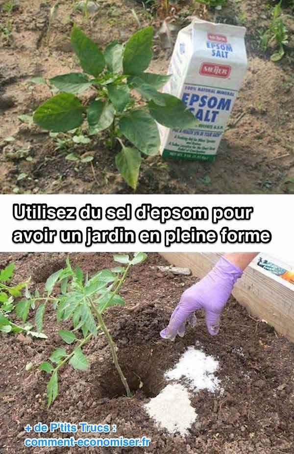 Utilisez du sel d'epsom pour avoir un jardin en pleine santé