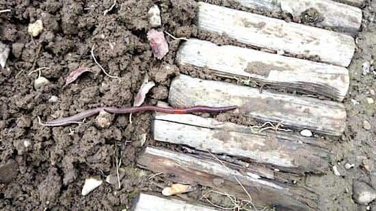 ver de terre utile jardin aération terre