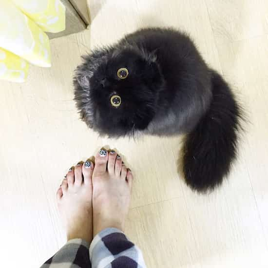 gros chat noirs avec gros yeux