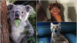 15 photos d'animaux totalement surpris