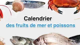 Calendrier des fruits de mer et poisson selon saison