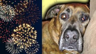 comment-aider-chien-qui-a-peur-feux-artifice