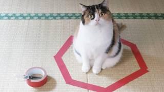expérience chat assis dans un cercle