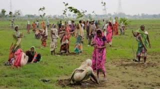 50 Millions d'Arbres Plantés En 1 Seule Journée