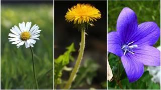 24 Plantes Comestibles Faciles à Reconnaître