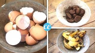 3 engrais naturels pour votre potager bio