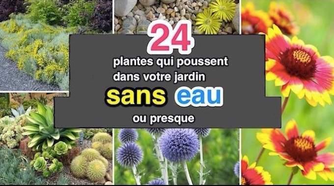 24 Plantes Qui Poussent Dans Votre Jardin SANS EAU (ou Presque).