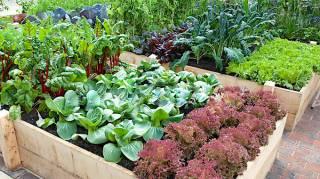 Quand Planter Ses Légumes Dans Le Potager
