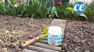 que faire avec le bicarbonate de soude au jardin potager