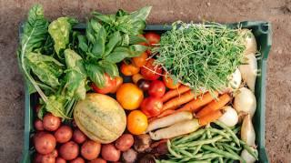 Tous Les Secrets Pour Faire Pousser Ses Légumes