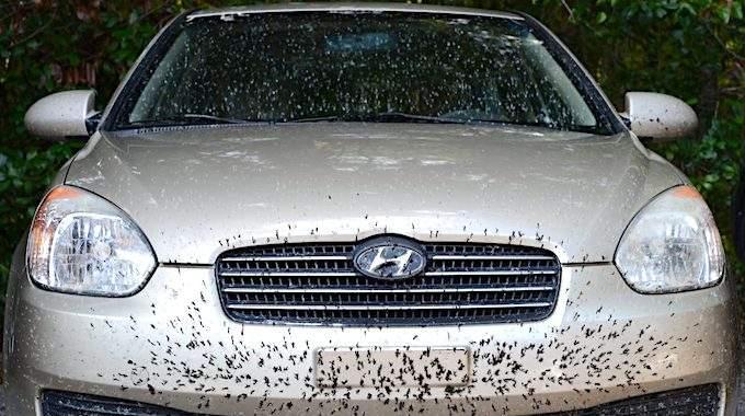 comment enlever les insectes sur une voiture avec du vinaigre blanc facile et rapide. Black Bedroom Furniture Sets. Home Design Ideas